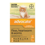 advocate-kittens-small-cats-to-4kg